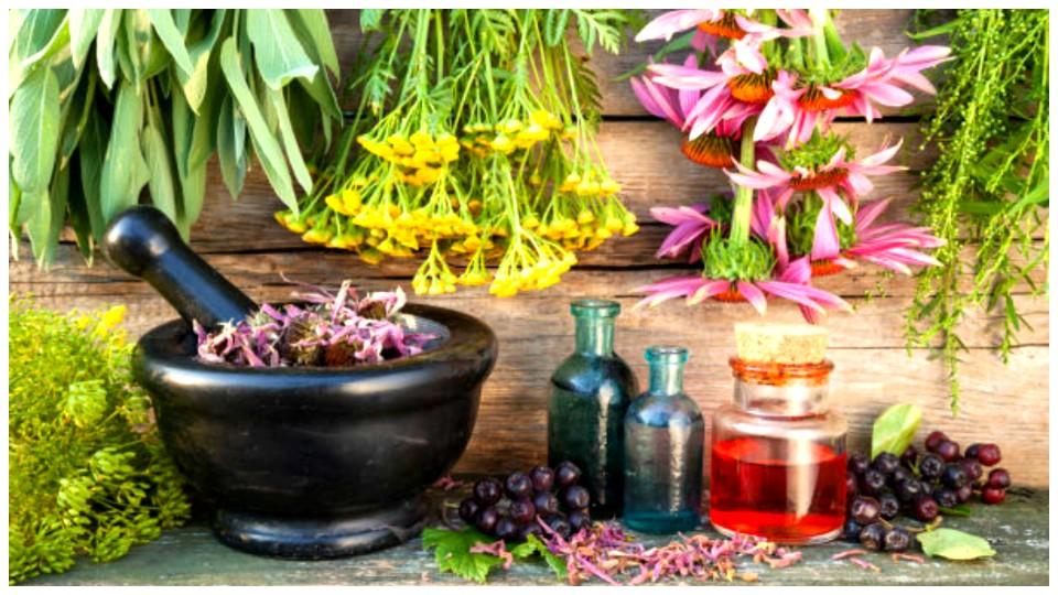 Un reportage sur les gu risseurs et les plantes for Plante 150 maladies madagascar