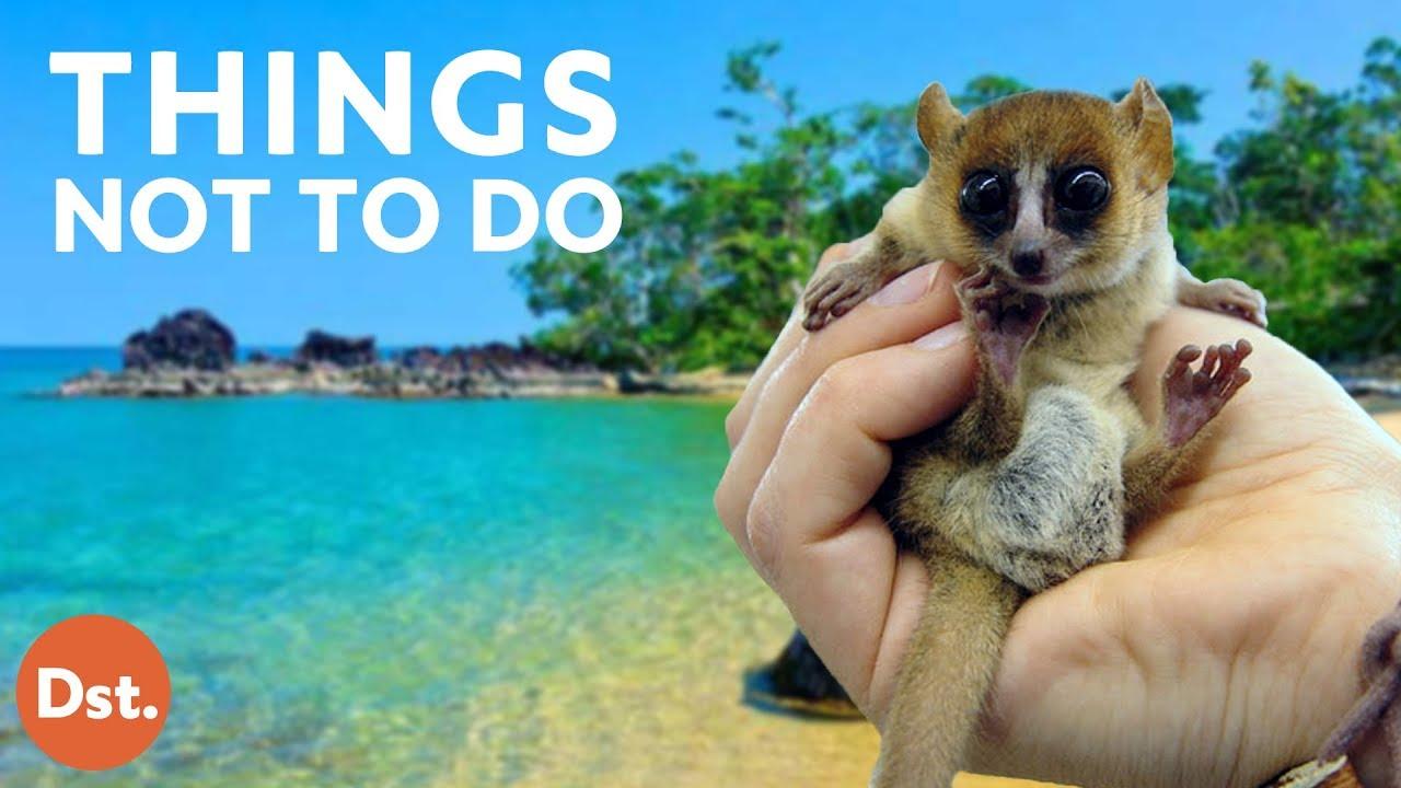 VIDEO. 10 choses à ne pas faire lorsque vous visitez Madagascar