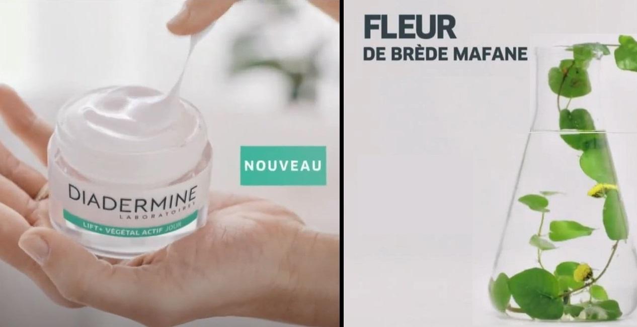 VIDEO. Le brède mafana utilisé par l'industrie cosmétique pour ses vertus anti-rides